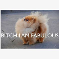 This is EXACTLY why I want a Pom. Too funny.