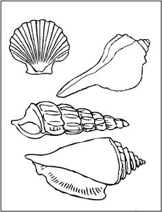 Printable Pictures of Sea Shells | Printable Seashell Coloring Pages