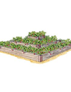 3-Tier Strawberry Bed ~ This terraced planter is sized to fit 25 strawberry plants for a big yield in a small space. We've combined our own industrial-strength aluminum corners with rot-resistant cedar to give you a sturdy, easy-to-assemble raised bed at a great price. This attractive bed is also suitable for growing flowers, herbs and salad greens.