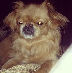 Grumpy dog puts grumpy cat to shame!