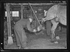 Blacksmith removing shoe from horse. The rope to hold up the hoof is necessary when shoeing an unruly horse. Forest County, Wisconsin. Photographer Russell Lee April 1937