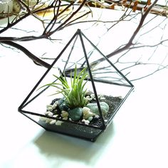 Don't you just love these geometric glass terrariums?