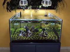 Image result for planted saltwater aquarium