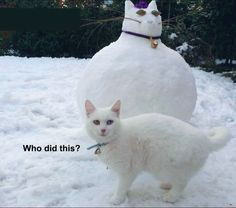 Funny Animal Pictures - View our collection of cute and funny pet videos and pics. New funny animal pictures and videos submitted daily. Funny Animal Memes, Funny Animal Pictures, Funny Animals, Cute Animals, Funny Photos, Animal Captions, Hilarious Pictures, Funny Snow Pictures, Cat Memes Hilarious