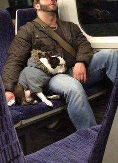 dogs on trains : Photo