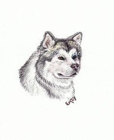 Alaskan Malamute Head Study in Watercolour Pencil