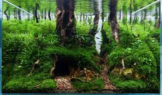 Hungarian Aquascaping Contest (HAC) 1st place