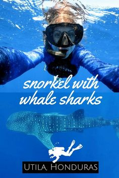 My whale Shark Dream became true in Utila - World Adventure Divers - Whale Sharks, Snorkelling, Scuba diving, Utila, Honduras - read more on Whale Shark Diving, Shark Swimming, Humpback Whale, Utila, Best Scuba Diving, Scuba Diving Gear, Padi Diving, Costa Rica, Tegucigalpa