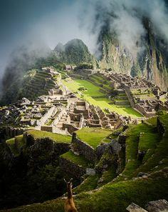 Llama peering over Machu Picchu, Peru