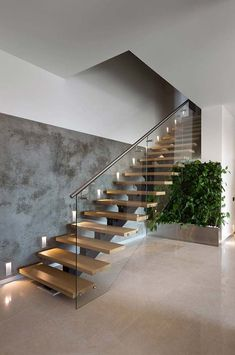 Wintergarden at the Northern Club / Fearon Hay Architects - Cool staircase idea. - Wintergarden at the Northern Club / Fearon Hay Architects – Cool staircase ideas. … stairs with beadboard risers…like this idea for my basement stairs! Home Stairs Design, Interior Stairs, Modern House Design, Stair Design, Staircase Design Modern, Steel Stairs Design, House Staircase, Staircase Ideas, Stair Idea