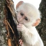 10 Frases com Macaco Em Inglês | EnglishOk http://www.englishok.com.br/10-frases-com-macaco-em-ingles/