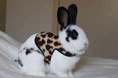 Pet rabbit harness animal print  Made to order by turvytopsy,