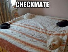 cats on the bed