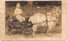 Boy, goat & cart, 1910