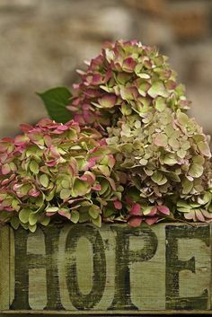Rose and Olive Hydrangeas