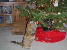 If Pets Sang Holiday Carols... Oh Catmas Tree