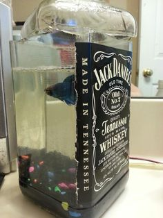 Jack Daniels bottle fish tank.  Oh my goodness. I want one.