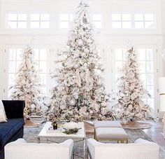Rachel Parcell's 2016 Christmas trees