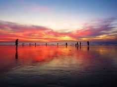 Darwin at sunset