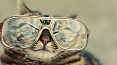 New Hipster Cat Wallpaper for your desktop, iphone, and android Background. Search more High resolution wallpapers on dodskypict. Wallpaper Hipster, Cat Wallpaper, Animal Wallpaper, 1920x1200 Wallpaper, Pastel Wallpaper, Computer Wallpaper, Cool Cats, I Love Cats, Funny Cats