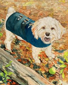 PRIVATE COLLECTION. Lille cute dog with coat, watercolor