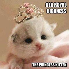 Her Royal Highness The Princess Kitten   Kittyworks
