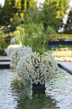 'Egyptian Royalty' bring Snow Princess lobularia and King Tut cyperus together in an exotic combination that is sure to catch the eye. http://emfl.us/UWHd #ProvenWinners