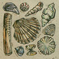 Shells lino cut print by StripedPebble on Etsy