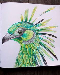 #milliemarotta #wildsavannah #bird #adultcoloringbook #adultcoloringbooks #relax #pencils #draw #drawing #animals #kohinoor #coloringbook #coloringbookforadults #relax #divokasavana