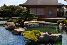 Tea house and koi pond