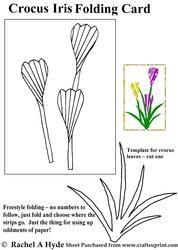 Crocus iris folding pattern