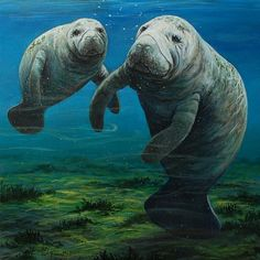 "Art Gallery 21 will be accepting artwork depicting the theme of ""Manatees and Mermaids: The Art of Sea Cows and Sirens"" and for those interested in entering, the details can be found at artgallery21.org. Underwater Creatures, Ocean Creatures, Animals And Pets, Baby Animals, Cute Animals, Baby Canvas, Sea Cow, Animals Beautiful, Majestic Animals"