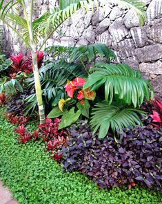 Small garden in tropical style, is it possible? - Small garden in tropical style, is it possible? Florida Landscaping, Tropical Landscaping, Landscaping With Rocks, Outdoor Landscaping, Outdoor Gardens, Landscaping Ideas, Small Tropical Gardens, Tropical Garden Design, Tropical Backyard