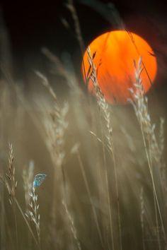 Harvest Moon, Looks Amazing ☄ #Nature