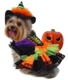 Shop for fun and playful Halloween witch costumes for dogs at Pet Stop Store! This dog witch costume is guaranteed to be the life of a holiday party. Lots of detail in lace trims on the leg holes and bottom. Pet Halloween Costumes, Witch Costumes, Dog Halloween, Pet Costumes, Halloween Stuff, Happy Halloween, Halloween 2013, Costume Ideas, Puppy Costume