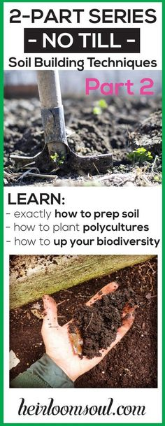 Amazing, informative 2-part blog series on HOW TO PREP and BUILD SOIL FERTILITY using no-till methods derived from Permaculture practices. Learn how to plant polycultures, prep using the double digging method, how to fertilize with homemade compost and compost tea, and how to mulch your garden! ~ Building Healthy Organic Garden Soil - Increasing the Biodiversity of your Soil Food Web, Part 2 | Heirloom Soul | heirloomsoul.com