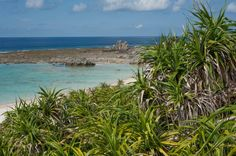 On the tropical beaches and lily fields of Iejima, you can still see the scars of WWII.
