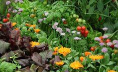 Huertos ecológicos [ahorra en salud] - Ver más | http://riegoyjardines.es/riego-y-jardines/huertos-ecologicos/ | #Cultivo, #HuertosCaseros, #HuertosEcológicos, #HuertosOrgánicos, #Instalación, #Plantación, #Presupuesto, #VerdurasEcológicas, #VerdurasOrgánicas