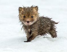 There is nothing cuter than a baby animal. These photos will bring a smile to your face.