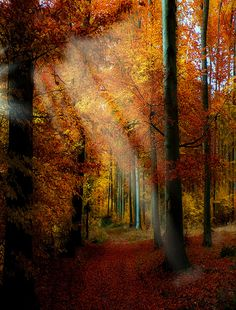 Foresta (by toalafoto)