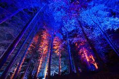 Where, How and Why You Must Visit Scotlands Enchanted Forest - Hand Luggage Only - Travel, Food & Photography Blog