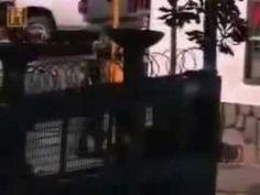 BRASILEIROS MORTOS POR REVELAREM OS SEGREDOS Abafado pelas ElitesDOS UFOS