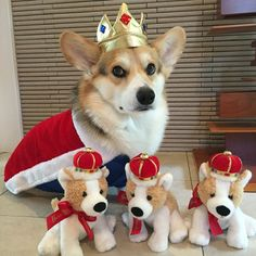 queen of her corgi kingdom