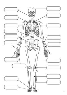 Human skeleton for labelling. girl catching a fish coloring-coloring and co Anatomy Bones, Human Anatomy, Human Body Activities, Dental Hygiene School, Biology Lessons, Human Skeleton, Skeleton Craft, Human Body Systems, Skeletal System