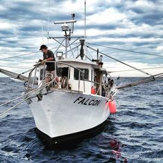 F/V Falcon. One of or commercial fishing boats. Seafood Online, Seafood Market, Fresh Seafood, Galveston, Historical Sites, Fishing Boats, Commercial, Marketing