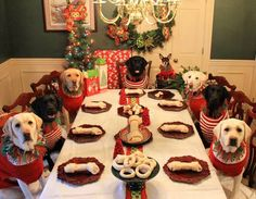 This is what my future looks like, but they will all be adopted dogs from shelters.