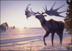 Megacero (ciervo prehistórico)