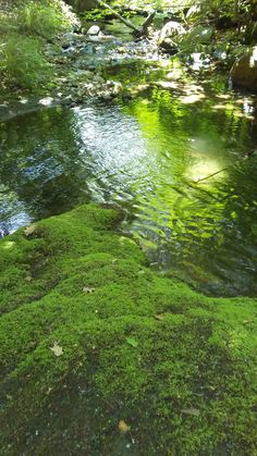 The babbling brook that runs parallel to our community is lush with all sorts of glowing greens throughout the summer. A sweet spot to cool off on a hot summer's day!