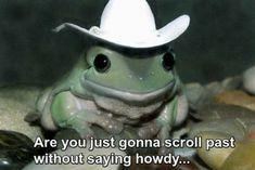 Baby Animals, Funny Animals, Cute Animals, Animal Memes, Tex Mex, Stupid Memes, Funny Memes, True Memes, Cute Frogs