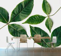 Nature inspired Photographic Wallpaper. Email nataschavniekerk@gmail.com Van Niekerk, Nature Inspired, Plant Leaves, Wallpaper, Plants, Inspiration, Home Decor, Homemade Home Decor, Biblical Inspiration